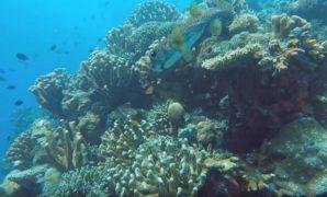 Bunaken Indonesia Dive Sites
