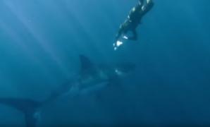 Whit Shark Conservationist Rob Stewart