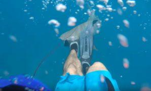 Spearfishing Florida Keys Got Beaten by Shark