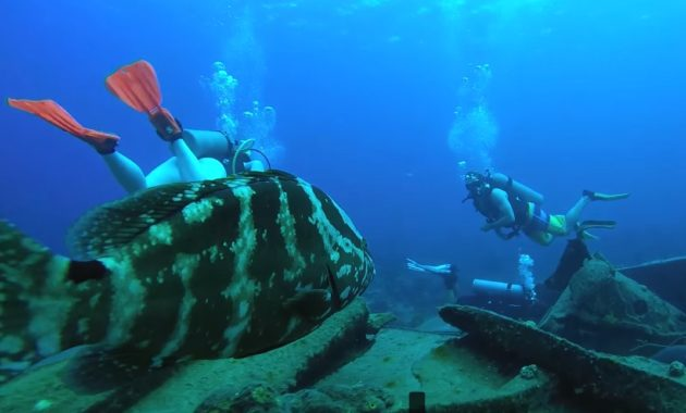 Can I Go Scuba Diving Without Certification