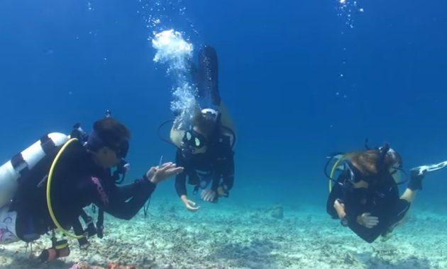 Scuba Diving Certification Edmonton