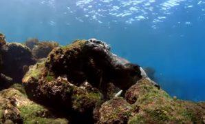 iguana-galapagos-liveaboard-diving