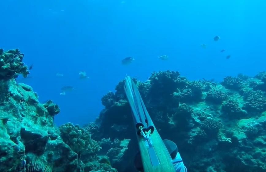 Hawaii spearfishing regulations of fish has problems