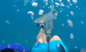 Spearfishing Florida Keys Got Beaten by Shark
