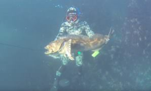 Spearfishing Lingcod Regulation