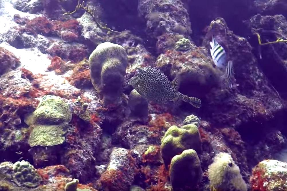 Bonaire Peaceful and Safe Place for Scuba Diving
