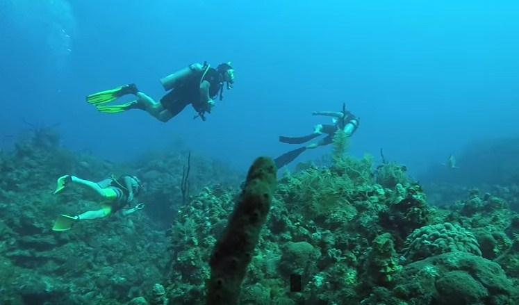 Can You Go Scuba Diving Without Certification