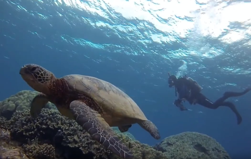 Hawaii for Scuba Diving best places to scuba dive in the world