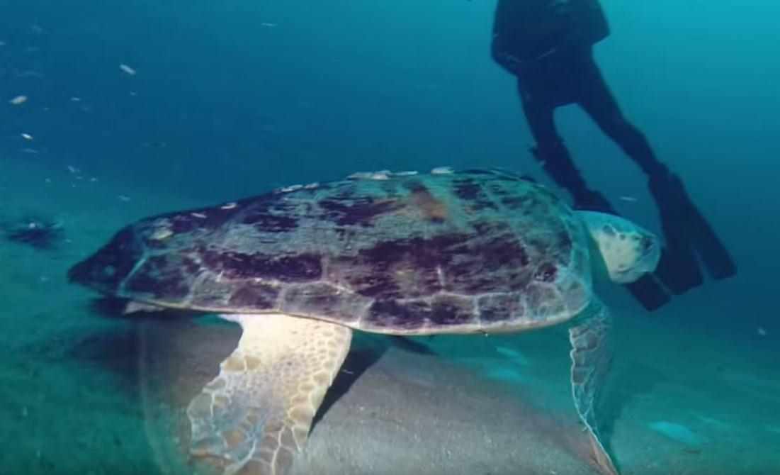 Pensacola Scuba Diving FL for Beginner