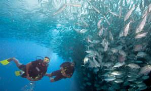 Scuba Diving Certification San Diego CA