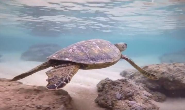 Snorkeling with Great Fun at Poipu Beach